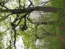 лес приморских эльфов