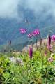 Цветы у склона. Вершина сопки Туманная.
