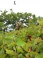 По пути к краю полуострова Шульца, северная граница бухты Витязь, встречались насекомые. Полуостров Гамова, Хасанский район.