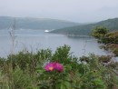 Полуостров Шульца, северная граница бухты Витязь. С него открывается обалденный вид на бухту Витязь. Полуостров Гамова, Хасанский район.