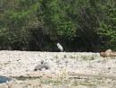 птичий пляж