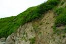 Обрывистый берег бухты малая Худовая