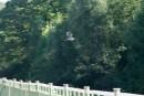 Цапель летит через мост р. Тигровая (Сица).  Район села Бровничи. Партизанский район.