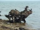 """Еще одно морское """"чудовище"""" оказалось на берегу."""