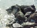 Волна и камни