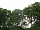 деревья сгрудились и смотрятся в море