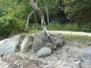 Какая жажда жизни! Из камня дерево растет.