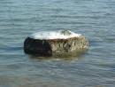 Бухточки правее Шаморы, одинокий камень во льду