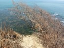 Ветер изменил форму деревьев
