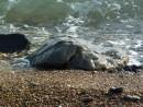 Волна на камень набегает