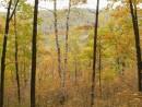 В осеннем лесу возле Кравцовки.