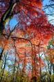 Смольные пороги Ливадийского хребта. Золотая осень.
