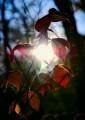 Сквозь листья пронзает солнечный свет. По тропе не доходя до ключа Смольного.