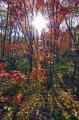 Восход в лесной чаще. По тропе не доходя до ключа Смольного.