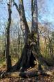 Один из первых ориентиров, что вы идёте правильно - дерево с большим дуплом. По тропе не доходя до ключа Смольного.