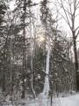 спрятанное дерево