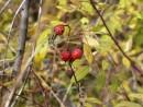 Крупным планом мелкие ягоды