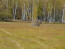 Поле, березовая роща и стога сена - просто сказочный пейзаж.