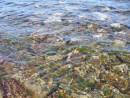Прибрежные воды и жизнь активная в них