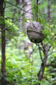 Гнездо шершней.