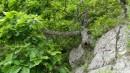 Лось в кустах. Берег Триозерья.