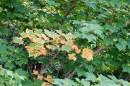 """""""А листья заболели чумой..."""""""
