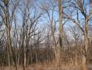 амурский залив за деревьями
