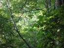 за деревьями солнечная полянка