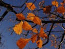 Уж небо осенью дышало.