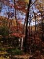 Октябрьский лес на Воробье.