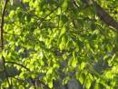 молодая зелень