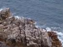 Вид на птичьи базары.  остров Петрова. Лазовский заповедник. Лазовский район