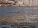 Баклан. Вид на остров Петрова с воды. Лазовский заповедник. Лазовский район