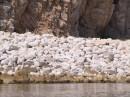Бухта с крупной галькой. Вид на остров Петрова с воды. Лазовский заповедник. Лазовский район