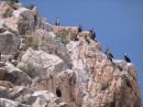 Птичьи базары. Вид на остров Петрова с воды. Лазовский заповедник. Лазовский район