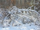 Снег налип на дерево