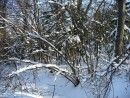 Зима в Ботаническом саду