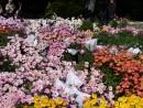 Целое поле цветов