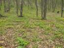 лес зацвел
