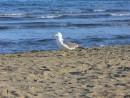 Идет хозяйка пляжа