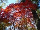 В багрец и золото одетые леса