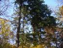Зеленые листья еще держатся