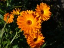 Еще цветы