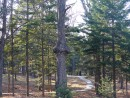 Странное дерево