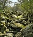 Холодный ручей под камнями.