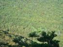 Зелёное море тайги.  Северные склоны г.Пидан.