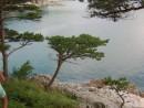 сосенка выскочила на берег