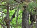 "У дерева ""суставы опухли"""