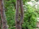 Природа играет не только людьми, но и деревьями