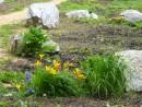 Сад камней и сад цветов